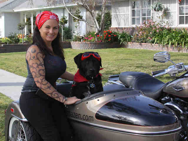 Dog Car Seats For Motorcycles