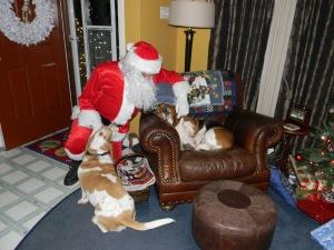 Oh Dog! It's Santa!