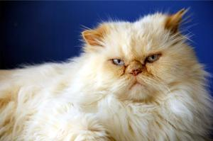 Gordon, the only cat more evil than June Buggie!