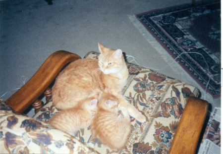 babies June Buggie and Bubba with Lover Boy (OTRB)