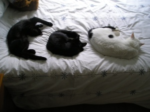 My Three Moggies!