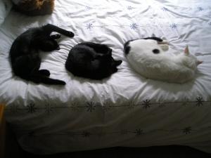 My Three Moggies!