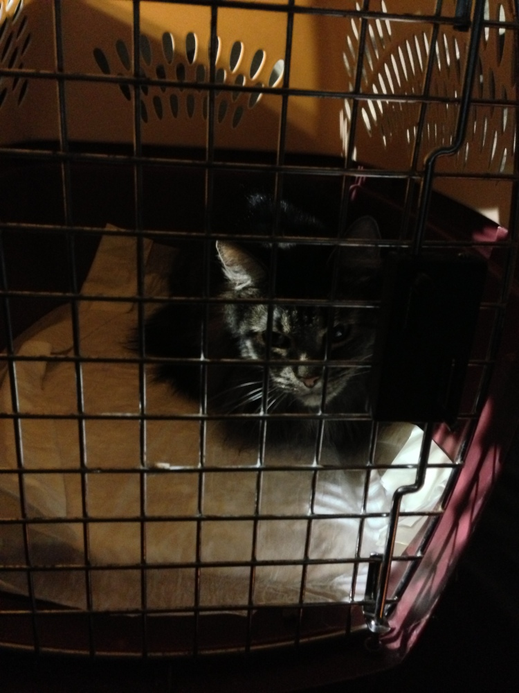 Poor kitty. It all ends after today Chloe!