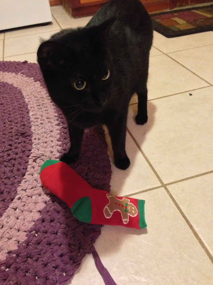 Graybie is checking out the catnip sock!