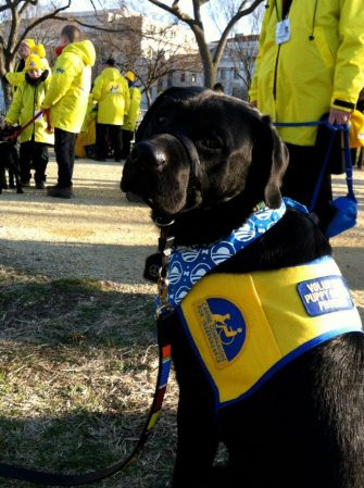 This is one of the dogs that marched in the parade (from the CCI Facebook page)