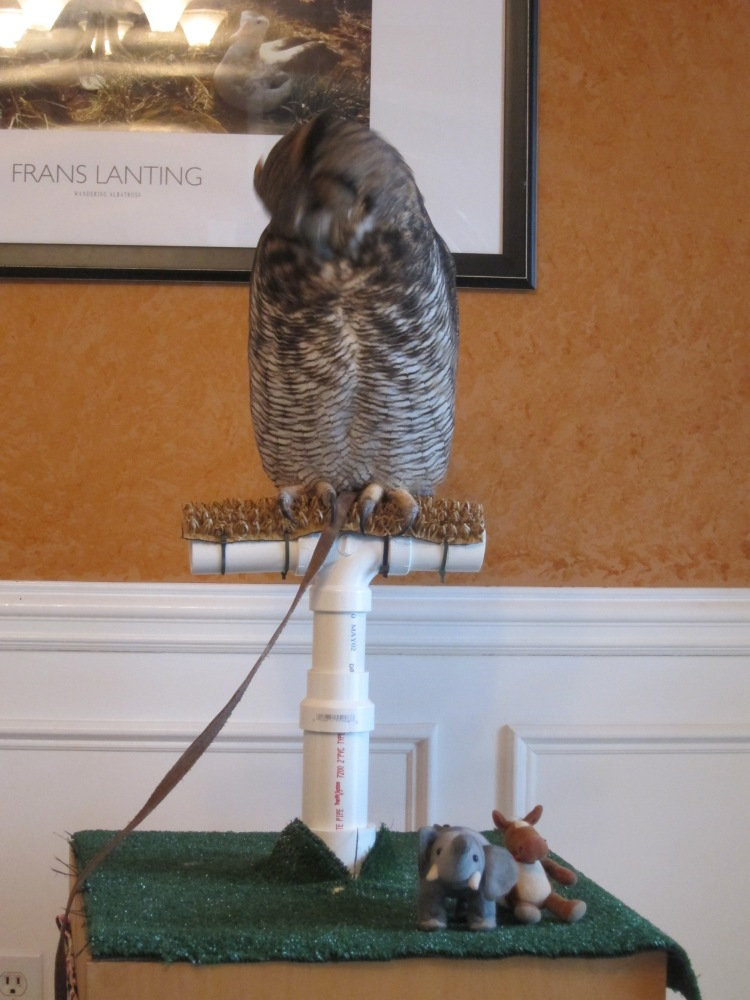 Whoa! How cool is this! An owl friend!