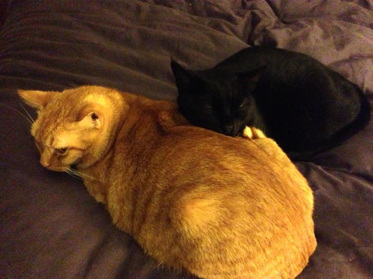 Graybie has a comfy pillow