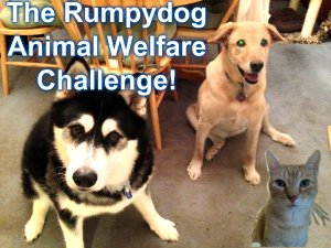 The Animal Welfare Blogger Challenge
