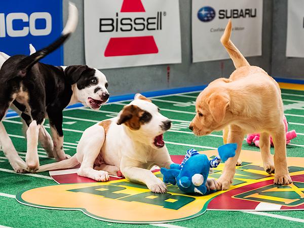 puppy-bowl-4-600