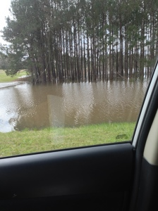 We've had lots of rain, and some places are still flooded!