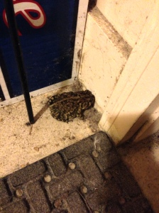 This toad tried to come inside!