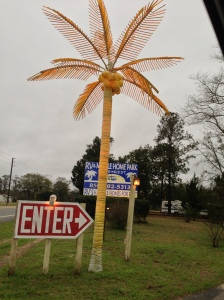 This palm lights up the entrance to a campground!