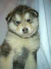 Sasha as a baby