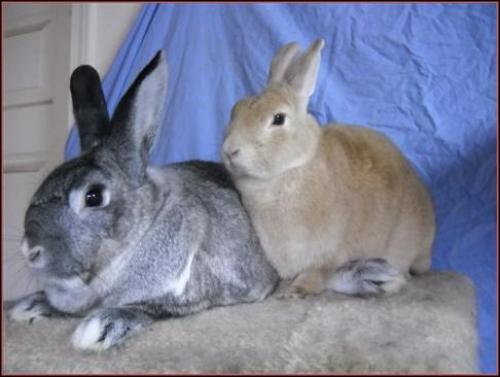 ChiChi and Chloe are available in Marietta GA; click on the pic for more info