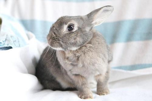 Coraline is available for adoption in Richmond, CA. Click on the pic to find out more!