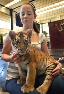 You thought it would be cool to hold a tiger cub. But did you ever once think what it must be like for that cub?