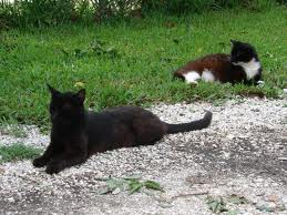 These cats are healthy and well fed thanks to Mayport Cats Inc.