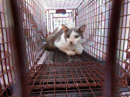 This kitty was caught in a humane trap and was neutered.