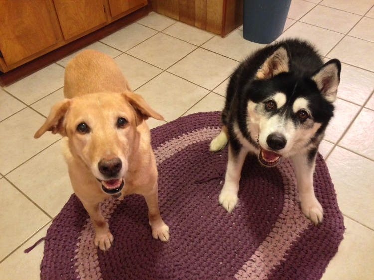 This is us begging for one of those cookies!
