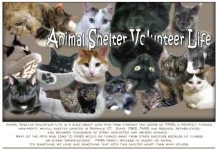 animal shelter volunteer