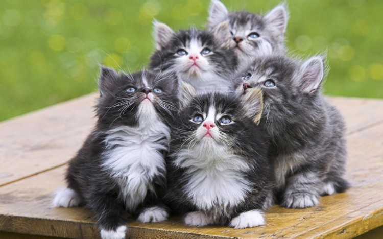 You see cute kittens. I wonder what will happen to them when they're not cute kittens anymore.