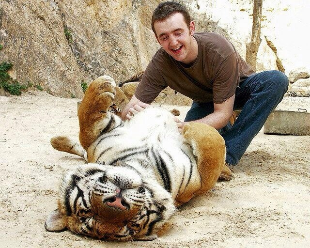 Do people really think they can do this with a tiger?