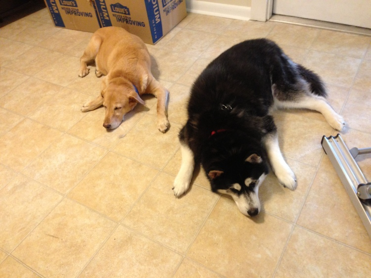 Here's two tired dogs. This moving stuff can wear ya out!