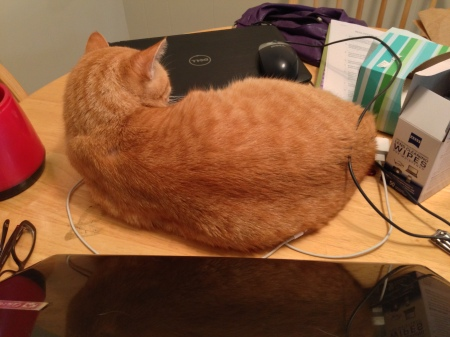 Thank you Ceiling Cat for warm spots by laptops.