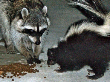 Please don't feed wildlife! You put them at great risk by doing so!