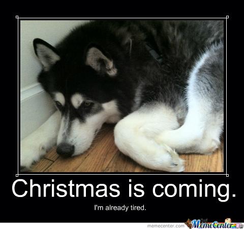 Its November I Meme It Dogpaddling Through Life
