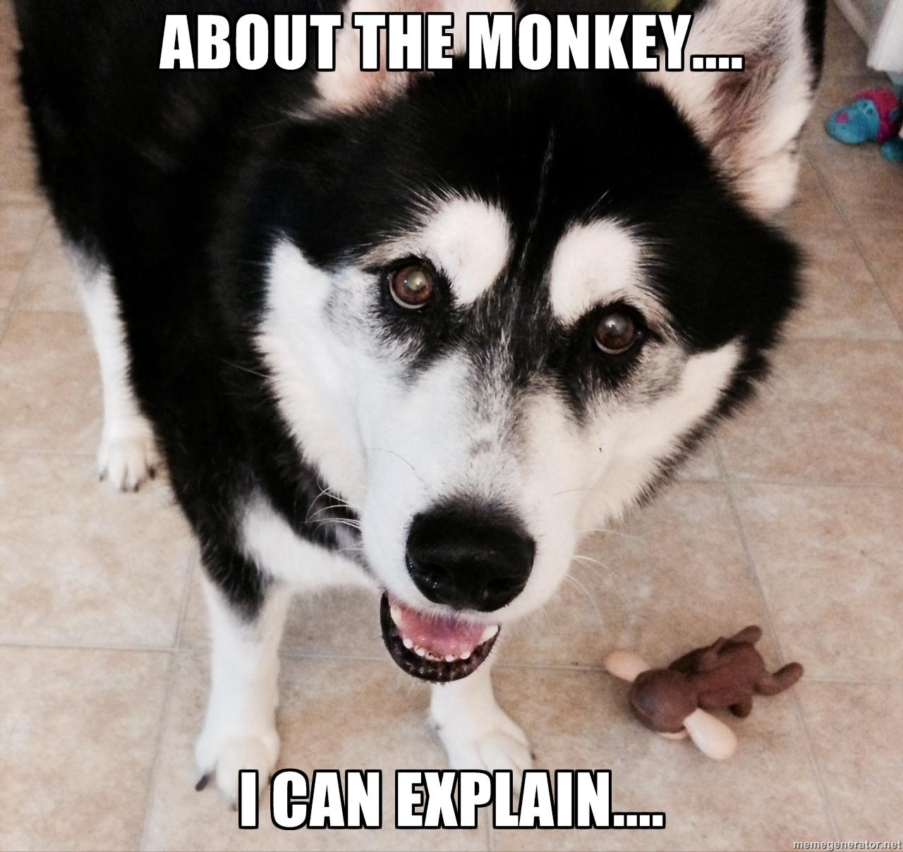 Cute funny friday rumpydog