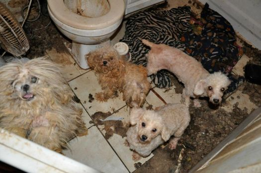 animals rescued from hoarder in OK last year (photo from OK Humane website)