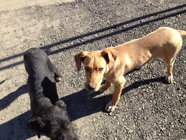 Sochi strays, photo tweeted by @blatchkiki