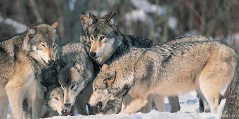 photo from National Wildlife Federation website