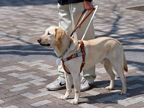 Service Dogs: Allow Access or Break the Law