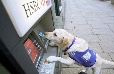 Dogs also assist with mobility. This dog is helping at the ATM machine.   Photo: vchca.org