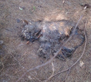 And this is what was actually going on. Yes, that is a cat that has been dead for quite awhile.