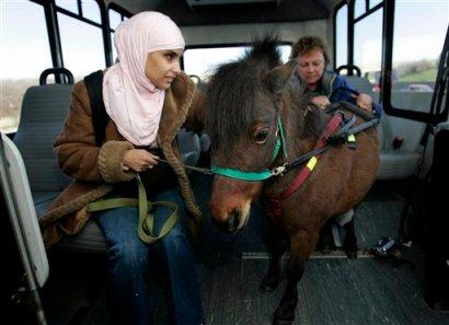 A service mininature horse (AP Photo/Carlos Osorio, FILE)