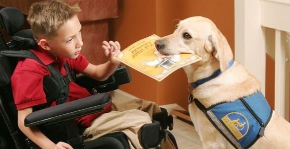What Do Service Dogs Need