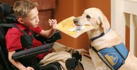 service-dog-with-boy