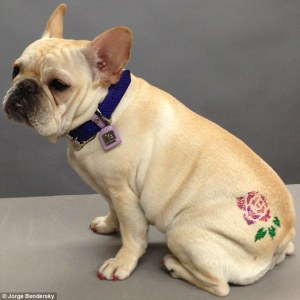 fake dog tattoo