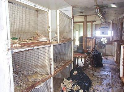A foreign puppy mill. UGH!  Photo from Mad Mike's America blog