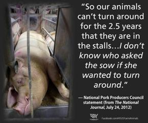 Remember, this is the mindset of the pork industry. To them, animals are a thing to make money off of. Period.