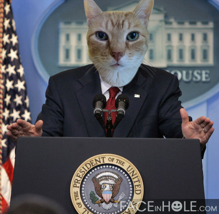 MEOW! I say take steps to keep us safe this 4th of July!