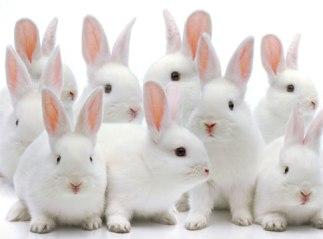 bunny_hero