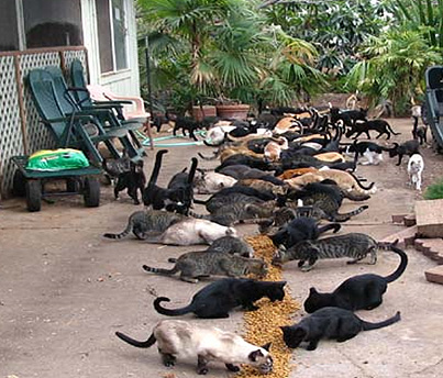 Humane Euthanasia For Feral Cats
