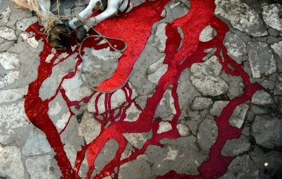 Blood runs in the streets after an animal is slaughtered (photo from Boston.com)