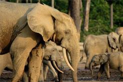 elephant_9