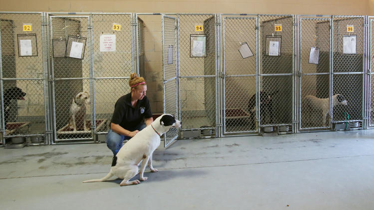 Fired Lake County Shelter Director Speaks Out Dogpaddling Through Life