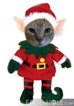 Buggie elf